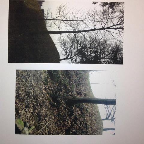Bild 2 - (Natur, Baum, grün)