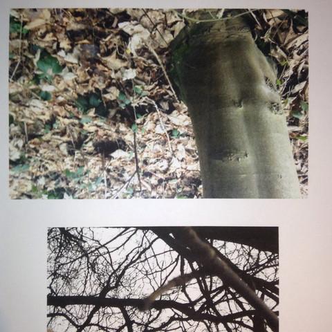 Bild 3 - (Natur, Baum, grün)