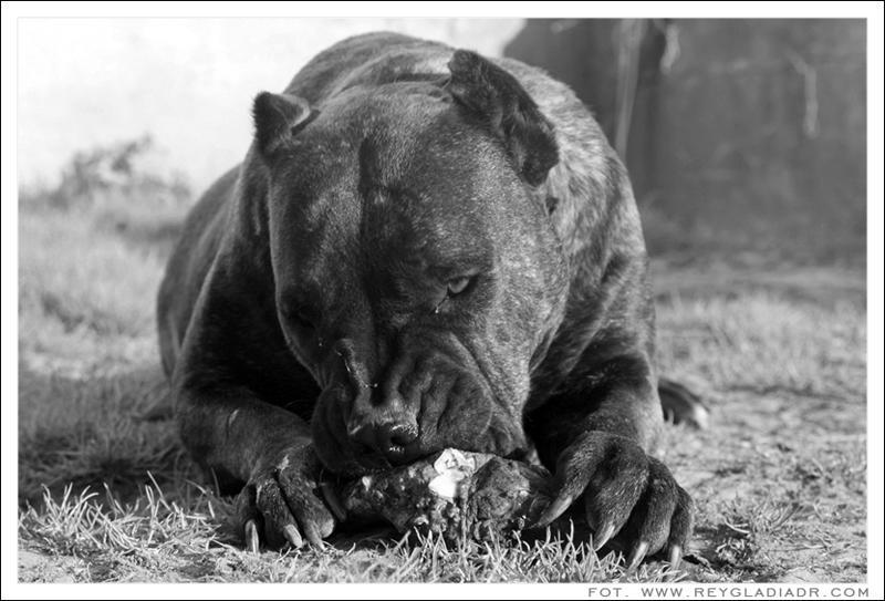 Wei 223 Einer Was Das F 252 R Eine Hunderasse Ist Hund