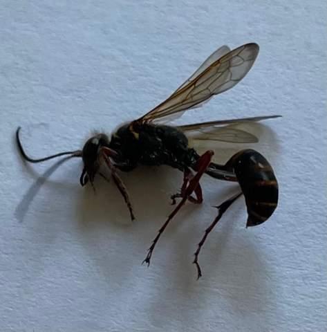 Weiß einer welches Insekt das ist?