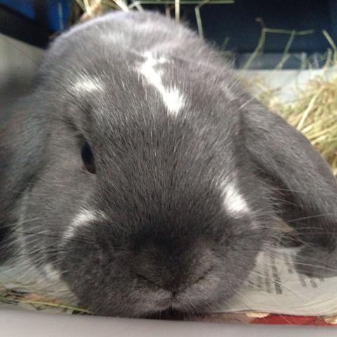 Mein Kaninchen  - (Name, Kaninchen)