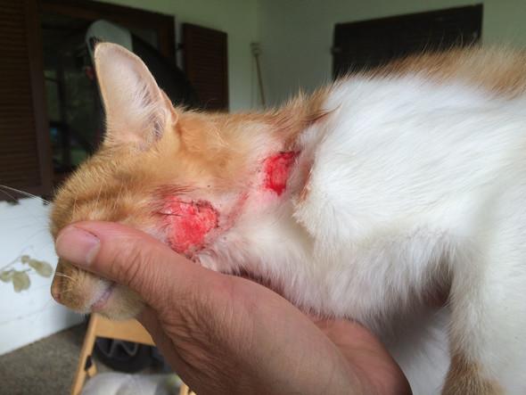 Katze chronisch krank - (Krankheit, Katze)