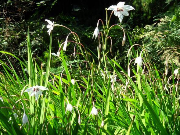 September im Tierpark - (Garten, Pflanzen, Blumen)
