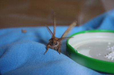 das ist es ;) - (Insekten, Motten)