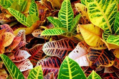 Wei Jemand Was Das Fr Eine Pflanze Und Ob Sie Giftig Ist