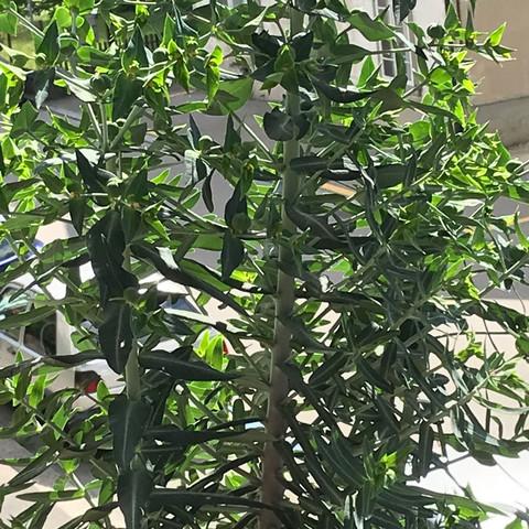 pflanze - (Pflanzen, Blumen, Botanik)