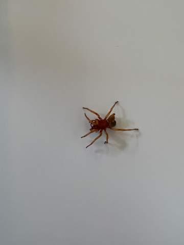 Weiß jemand was das für eine Spinne ist?
