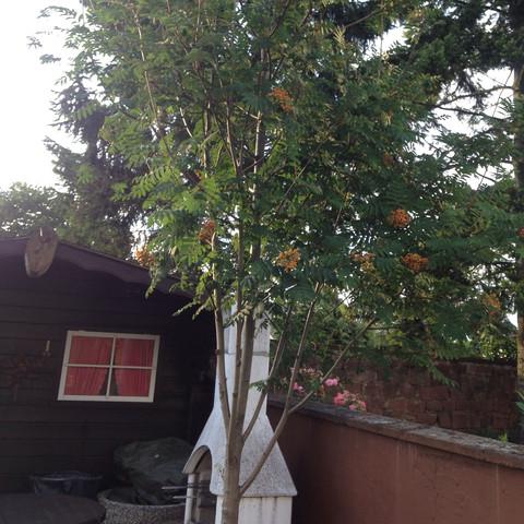 Was für ein Baum ist das ? - (Baum)