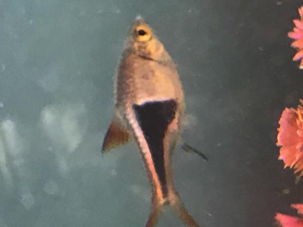 Fisch  - (Fische, Art)