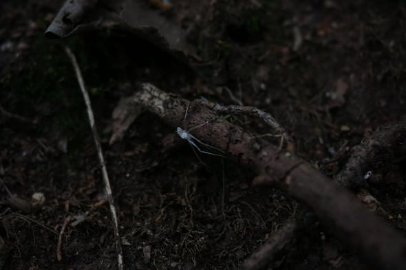 Das Insekt - (Tiere, Insekten)