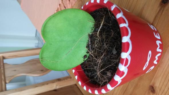 die Pflanze - (Pflanzen, Art)
