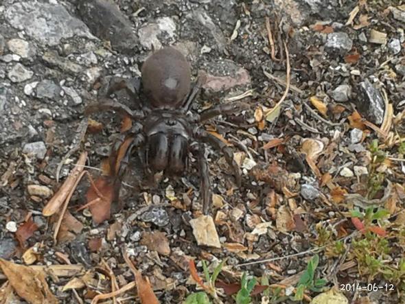 Von vorne - (Freizeit, Spinnen, Tierarten)