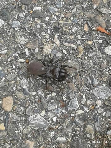 Von oben - (Freizeit, Spinnen, Tierarten)