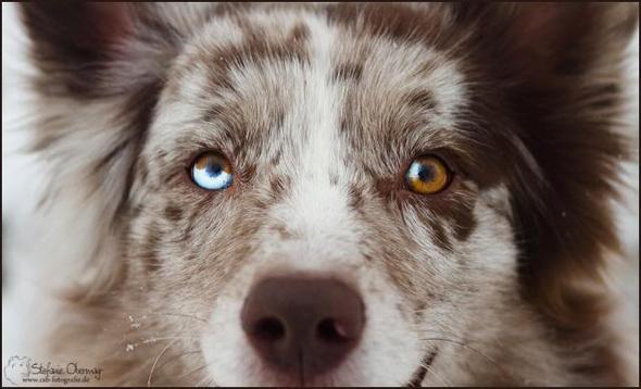 2. - (Hund, Rasse, Mischling)