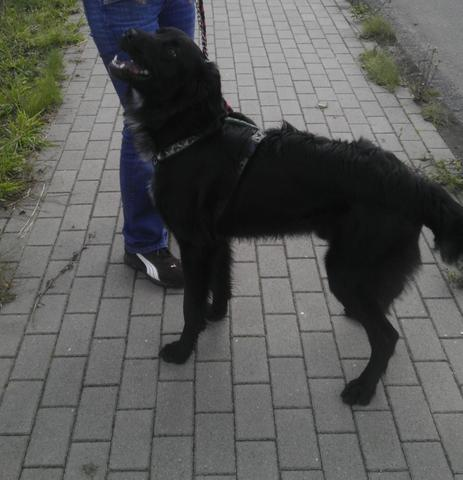 Bild03 - (Tiere, Hund, Rasse)