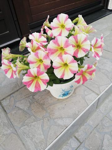- (Name, Blumen)