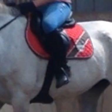 Die Schabracke meiner RB. Größe Vielseitigkeit  - (Pferde, reiten, Namen)