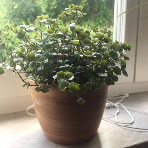 wei jemand wie diese pflanze hei t aus dem baumarkt garten pflanzen botanik. Black Bedroom Furniture Sets. Home Design Ideas