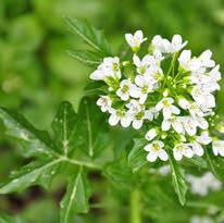 Pflanze im garten  - (Garten, Pflanzen, Küchenkräuter)