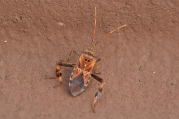 Weiß Jemand Wie Dieser Käfer Heißt? Giftig? (Tiere