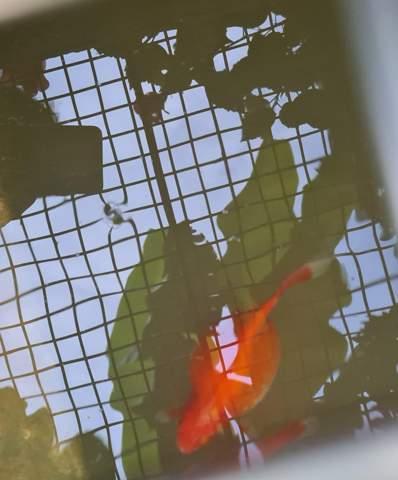 Weiß jmd. was mit meinem Fisch los ist?