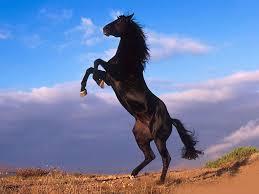 ?? - (Pferde, Pferderassen)