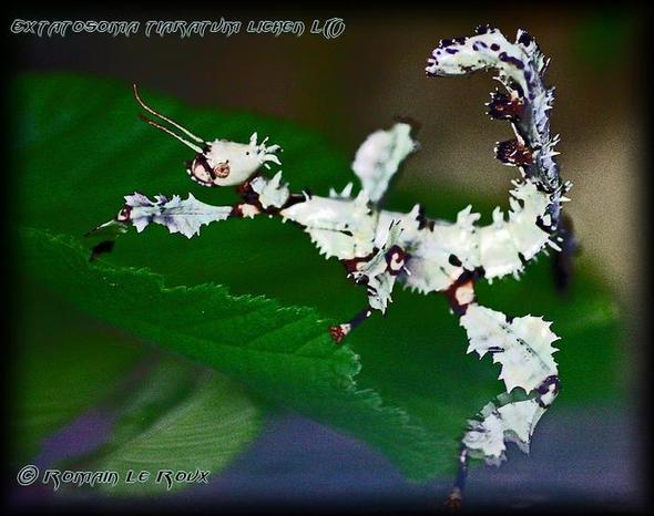 weisse Schrecke - (Insekten, weiß)