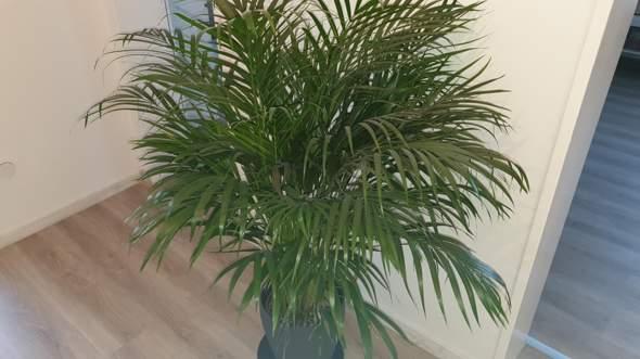Weiße Punkte auf der Pflanze, wie entfernen?