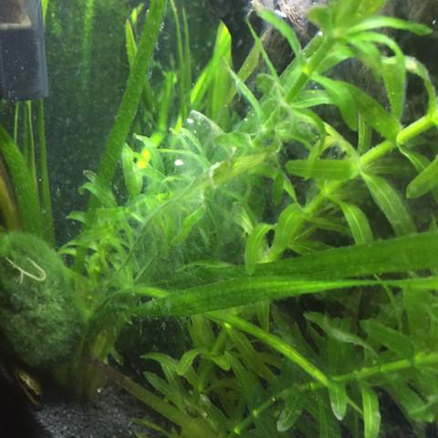 wei er belag auf aquariumboden pflanzen fische aquarium. Black Bedroom Furniture Sets. Home Design Ideas