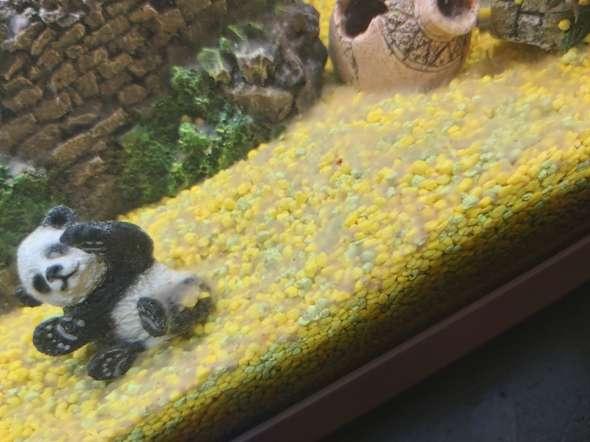 Weisser Belag im Aquarium und schlimmer Geruch, was tun?