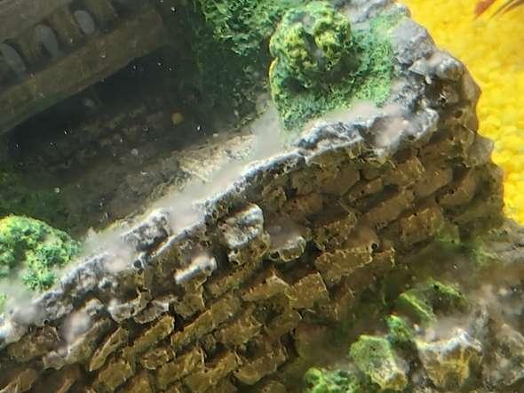 Weisser Belag im Aquarium und schlimmer Geruch, was tun
