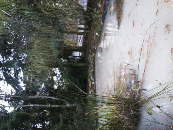 Wei es wasser im gartenteich garten fische teich for Garten fische