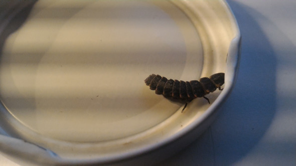 Insekt  - (Natur, Insekten)