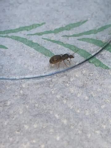 Welche Ameisen Art  ist das?