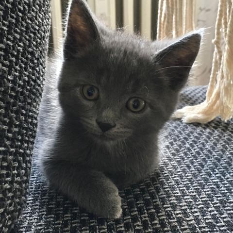 Kater Lou 😍 - (Katze, Katzen, Kater)