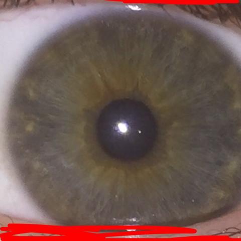 Diese - (Augen, Farbe, Aussehen)