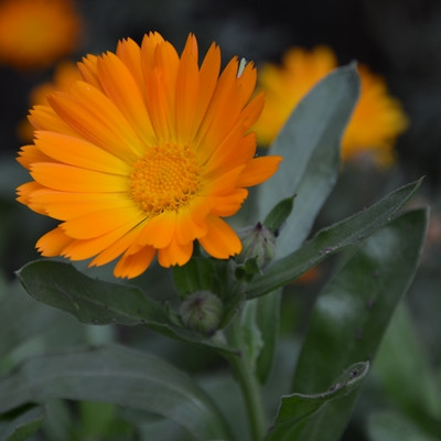 welche blume ist das orangene bl tter pflanzen natur blumen. Black Bedroom Furniture Sets. Home Design Ideas