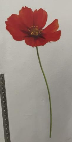 BLume - (Blumen, Botanik)