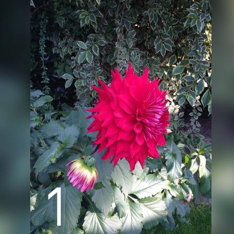Die erste  - (Blumen, schön)