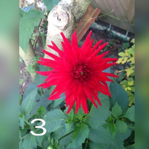 Die dritte  - (Blumen, schön)