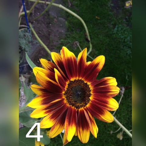 Die vierte  - (Blumen, schön)
