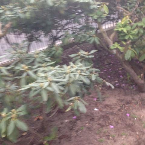 Nr 2 blätter hängen etwas runter - (Biologie, Garten, Pflanzen)
