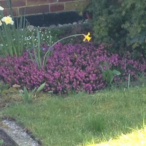 Nr 3 ( das rosane )  - (Biologie, Garten, Pflanzen)