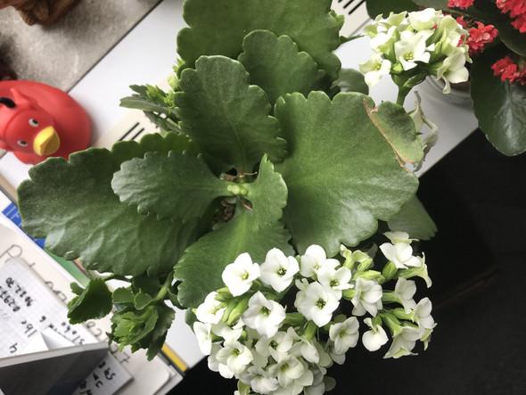 Welche Blume/Zimmerpflanze ist es?