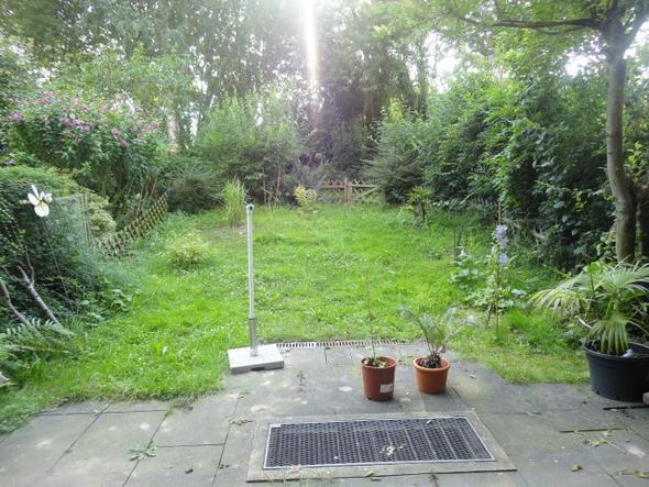 Garten - (Garten, Pflanzen, Busch)
