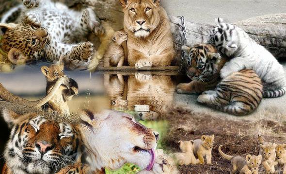 Welche dieser Raubkatzen gefällt euch am Besten?