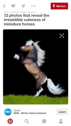 welche farbe hat das pony pferde fellfarbe. Black Bedroom Furniture Sets. Home Design Ideas