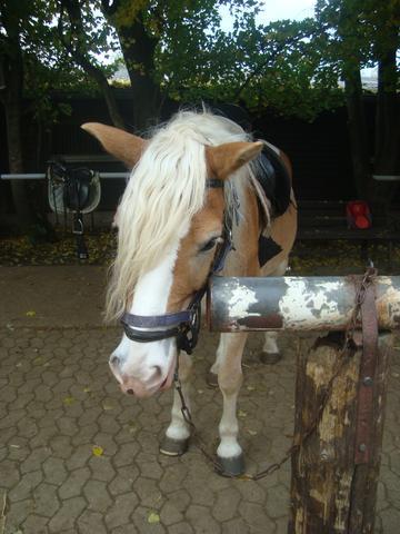 Nando - (Pferde, Farbe, reiten)