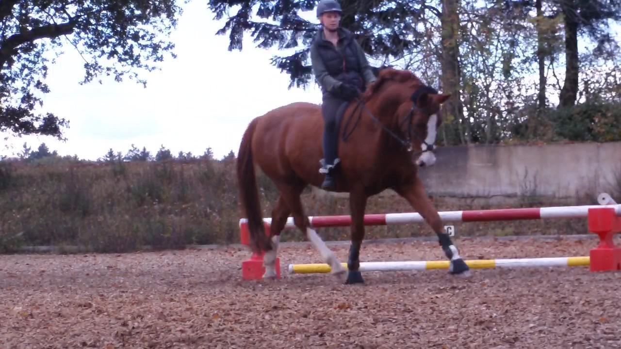 Mein Pferd Und Ich 2 Download Kostenlos