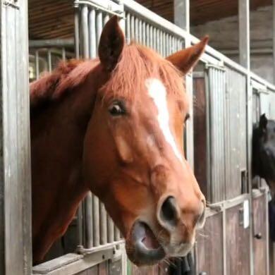 Mein Wallach:) - (Tiere, Pferde, Fellfarbe)